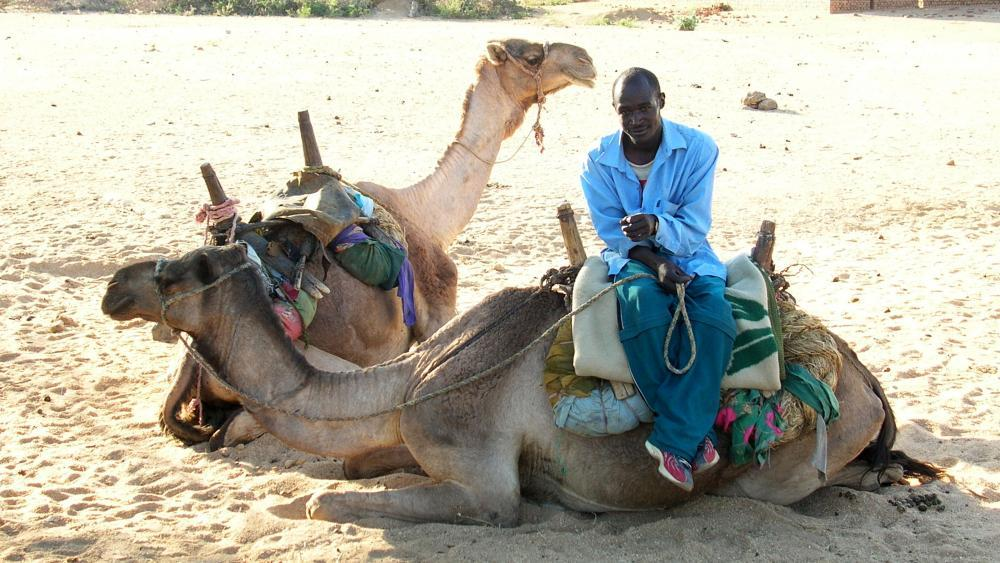 Nurse or Doctor for nomads in Chad